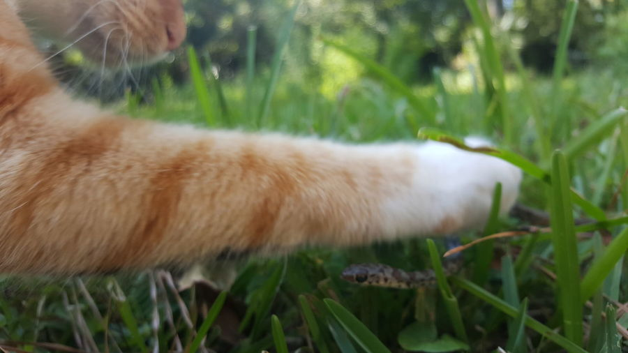 Gotcha. Cat Cat Vs Nature Cat V Snake Part 2 Snake Head Cat Strike