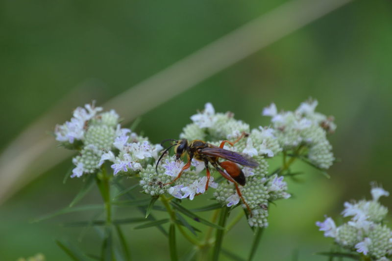 Beauty In Nature Blooming Close-up Day Flower Fragility Freshness Growth Insect Nature No People Outdoors Petal Plant Pollen Pollination Selective Focus Wildlife Maximum Closeness Bugs Life Nature Photography Wasp Macro Wasp Wasps🐝 Wasp Close Up