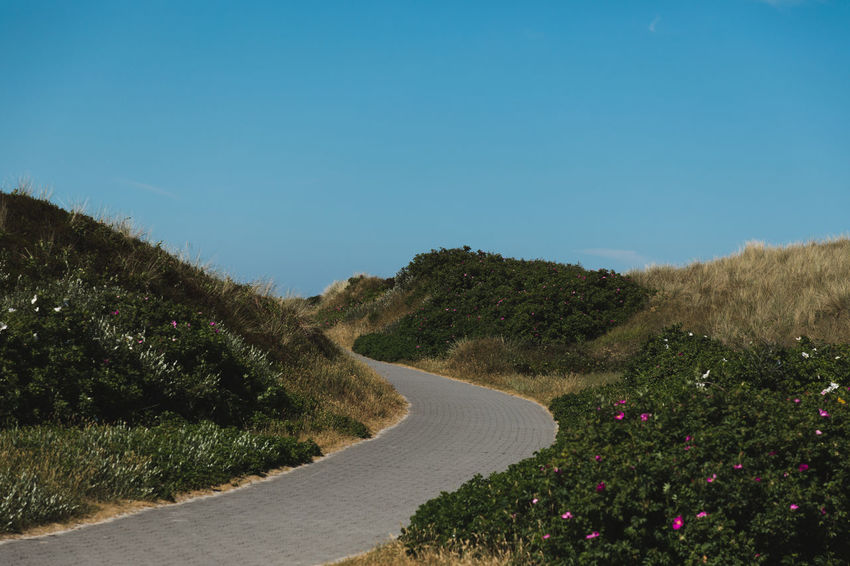 On the path. Beauty In Nature Clear Sky Copy Space Day Direction Flower Flowering Plant Growth Landscape Long Nature No People Outdoors Plant Road Scenics - Nature Sky The Way Forward Tranquil Scene Tranquility Transportation Tree