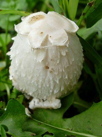 Nature Mushroom Macro