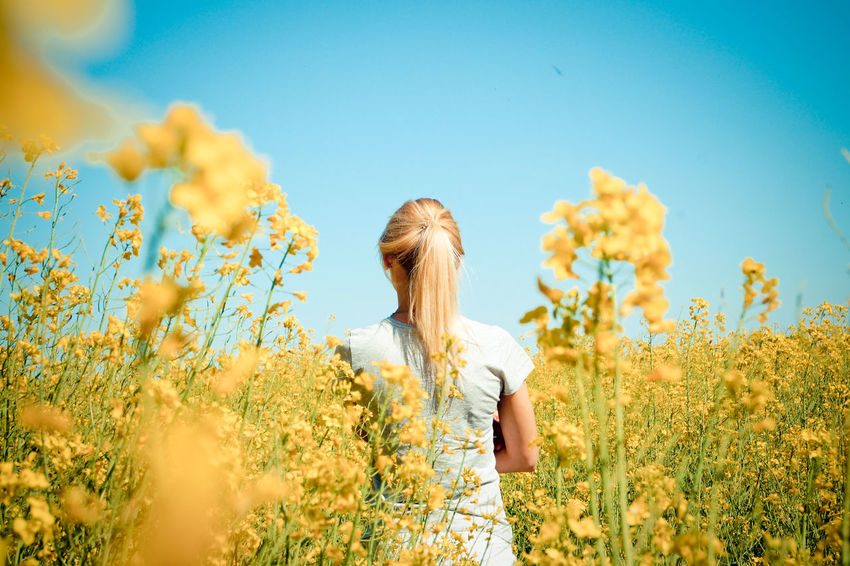 Beauty In Nature Blooming Blossom Blue Close-up Day Field Flower Flower Head Focus On Foreground Fragility Freshness Growth In Bloom Nature No People Outdoors Petal Plant Sky Stem The Great Outdoors - 2016 EyeEm Awards The Portraitist - 2016 EyeEm Awards The Essence Of Summer Yellow