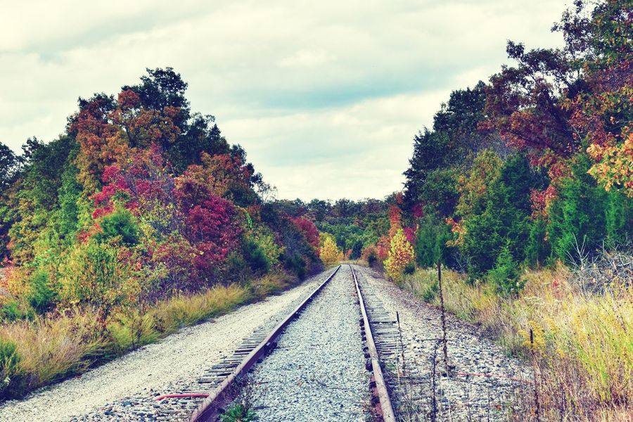 Tree Railroad Track Rail Transportation Sky Cloud - Sky vanishing point Treelined Pathway The Way Forward Railroad Tie Diminishing Perspective Parallel Countryside Scenics Tranquil Scene Tranquility Railway Track