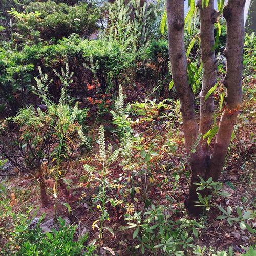 Taking Photos Everyday Joy Trees Plants Sunshine Sunlight