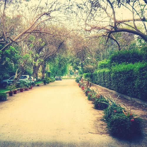 Tree Nature Growth Beauty In Nature Green Color Day Branch Plant Outdoors No People Freshness Maadi