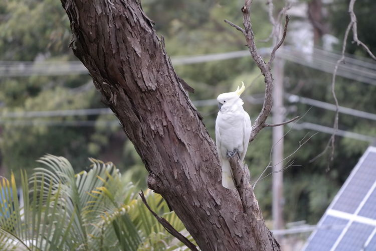 cockatoo on tree Tree No People Cockatoo Bird One Animal Focus On Foreground Perching Animal Themes Animals In The Wild Animal Wildlife Nature Outdoors Branch