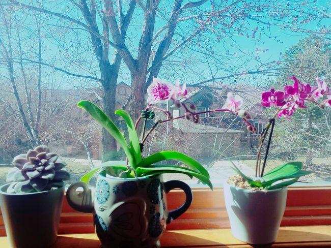 Orchids Succulent Plant