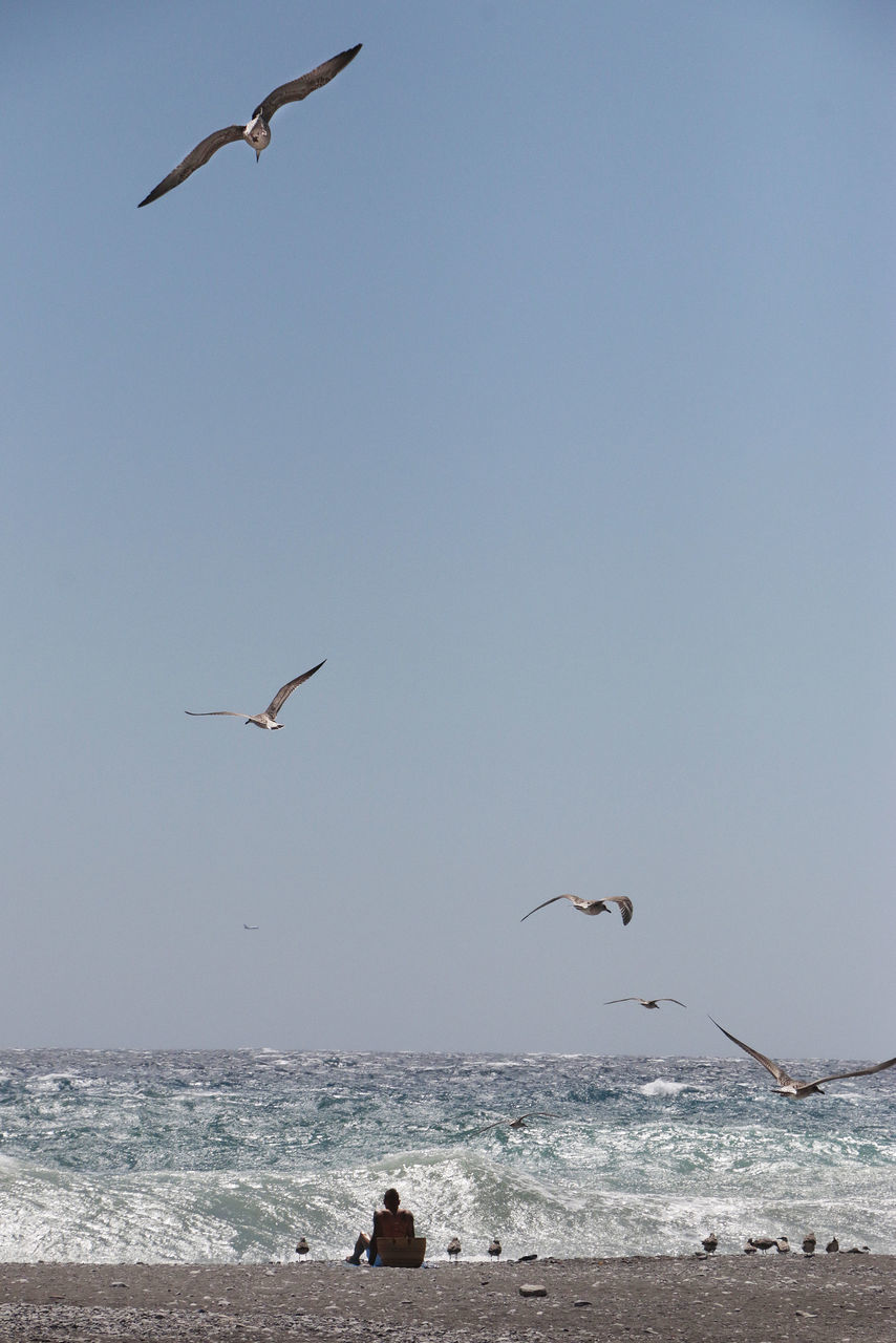 sea, flying, animal themes, sky, vertebrate, animal, animals in the wild, animal wildlife, water, bird, group of animals, spread wings, horizon over water, mid-air, horizon, nature, clear sky, beauty in nature, scenics - nature, seagull