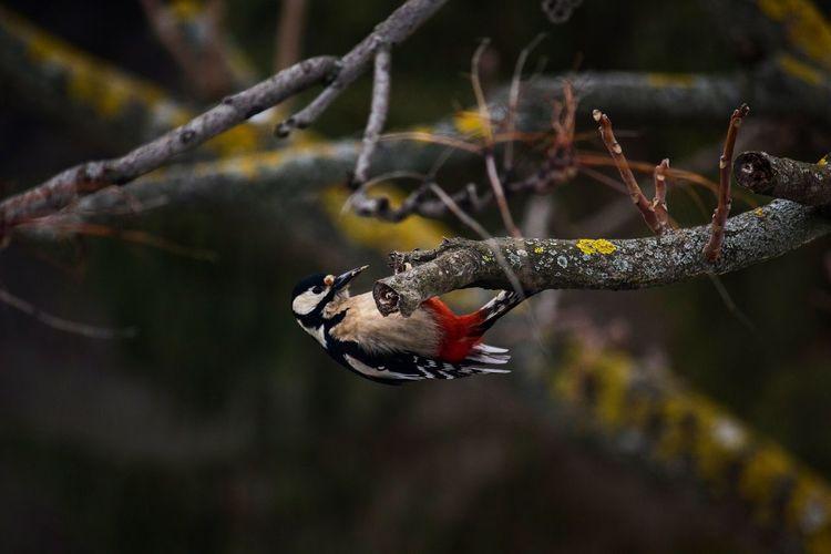 Woodpecker perching on tree branch