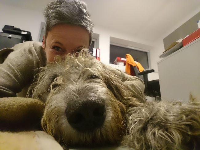 Good morning Indoors  Irishwolfhound Dogsareawesome Dogs Of EyeEm Dog Life Dog Days Willi The Wolfhound Irish Wolfhound Dog Photography Domestic Animals Bonding Togerherness Selfie ♥