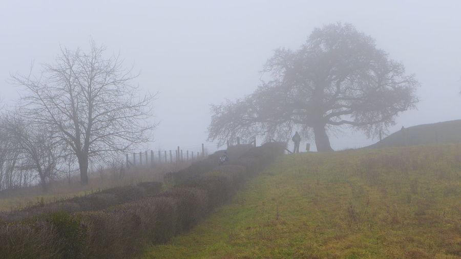 Tree Hill Fog Corylus Colurna Francis II. Rákóczi Nature Outdoor Turkish Filbert Turkish Hazel Winter in Romhány, Cserhát, Hungary