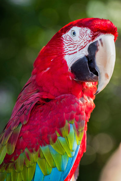 Animal Animal Body Part Animal Head  Animal Markings Animal Themes Avian Beak Beauty In Nature Bird Close-up Day Feather  Flamingo Focus On Foreground Multi Colored Natural Pattern Nature No People Outdoors Pink Color Red Selective Focus Wildlife
