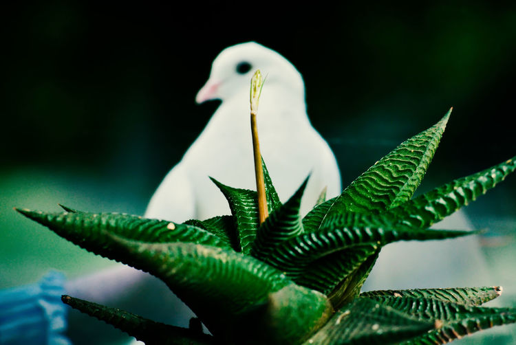 Green Color Leaf Animals In The Wild Animal Themes Vertebrate Bird Animal Plant Close-up Animal Wildlife Plant Part Nature No People Focus On Foreground Growth Beauty In Nature One Animal Day Outdoors