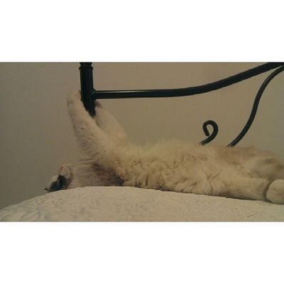 Enrique quiere que lo aten a los barrotes de mi cama. Srenrique Gatolicismo Gato Gat bed buenasnoches bonanit goodnight sexy