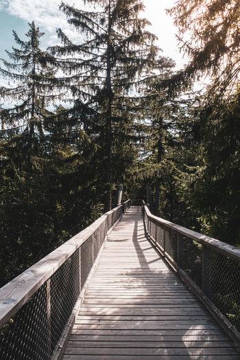 View of footbridge in forest