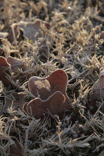 High angle view of mushroom on field