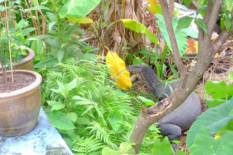 lizard in garden Lizard Reptile Animal Tree Plant Leaves Leaf Green Color Green Garden Park Nature Life Leaf Tree Plant