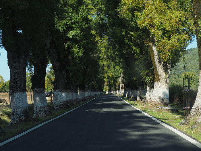 Lets hit the road Tree Road Treelined vanishing point Road Marking Country Road Asphalt Empty Road Woods The Way Forward Pathway Tree Trunk