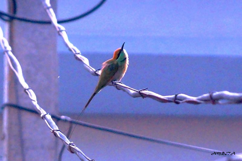 EyeEm Birds Birdwatching Bird Singing Taking Photos