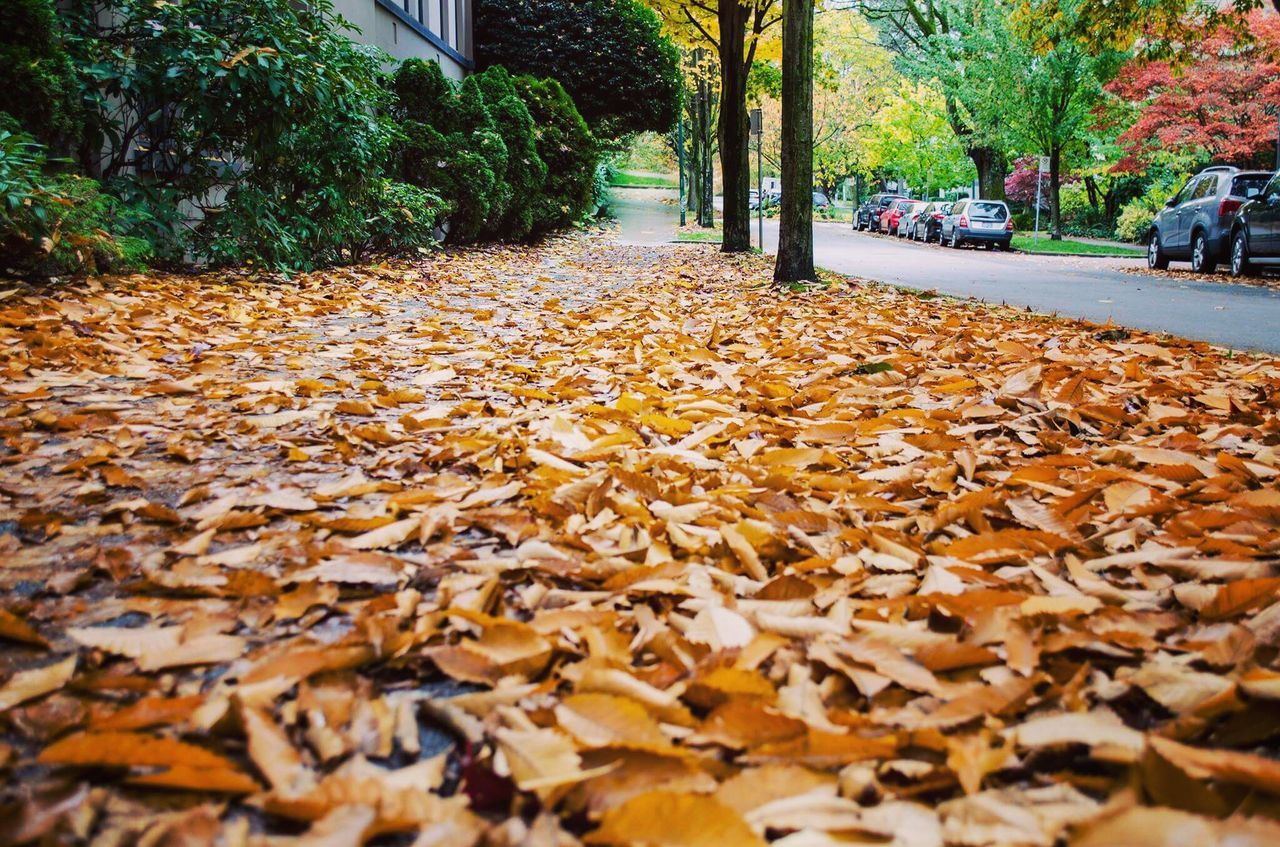 autumn, leaf, change, nature, tree, leaves, surface level, outdoors, dry, day, beauty in nature, fallen, yellow, fragility, no people, close-up, maple