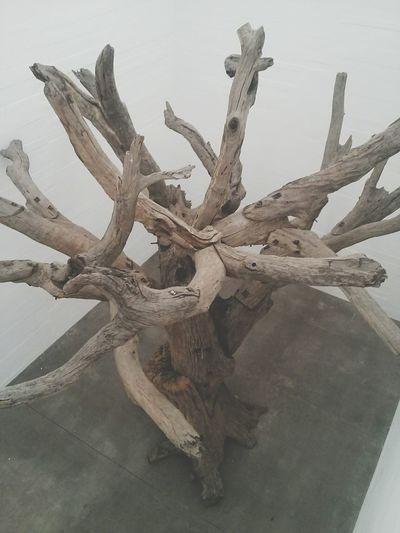 Lone Tree Tree Art Art Installation Ai Weiwei