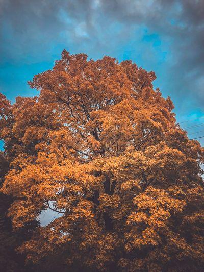 #autumn#осень