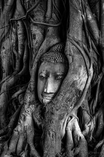 The stone Buddha head entwined in tree roots at Wat Mahathat Ayutthaya Banyan Tree Black And White Photography Budism HEAD Historic Land Of Smiles Relaxing Stone Thailand