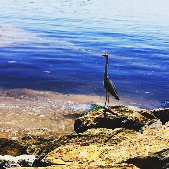 Huzur Kayalıklar Deniz Leylek Nature Stork Sea EyeEmNewHere EyeEmNewHere Water Animal Nature Day Beauty In Nature Animals In The Wild Animal Themes One Animal Animal Wildlife High Angle View Beach Huzur Kayalıklar Deniz Leylek Nature Stork Sea EyeEmNewHere EyeEmNewHere Water Animal Nature Day Beauty In Nature Animals In The Wild Animal Themes One Animal Animal Wildlife High Angle View Beach