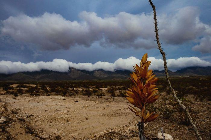 Franklin Mountains El Paso Tx Desert Landscape Cloud - Sky Outdoors Nature Beauty In Nature EyeEm Best Shots Taking Photos Photography Fujifilm Fuji X-T1 EyeEm Camera EyeEm Gallery Cloud Clouds And Sky Sky Blue Desert Flowers