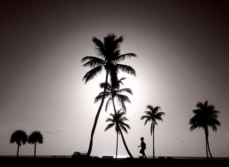 Between the trees he ran. NEM Black&white
