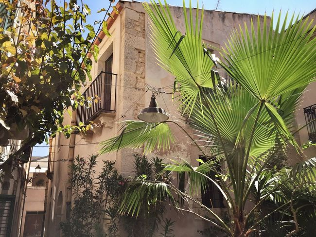 Giudecca - Ortigia - Siracusa Hello World Taking Photos Enjoying Life Relaxing Perspective Light And Shadow Enjoying The Sun Architectural Detail Giudecca - Ortigia Discover Your City Walking Around The City  I Love My City Sicilia Ortigia Architecture Sicily Siciliabedda Street Narrow Street Taking Photos Plant Garden Curiosity Beauty In Nature
