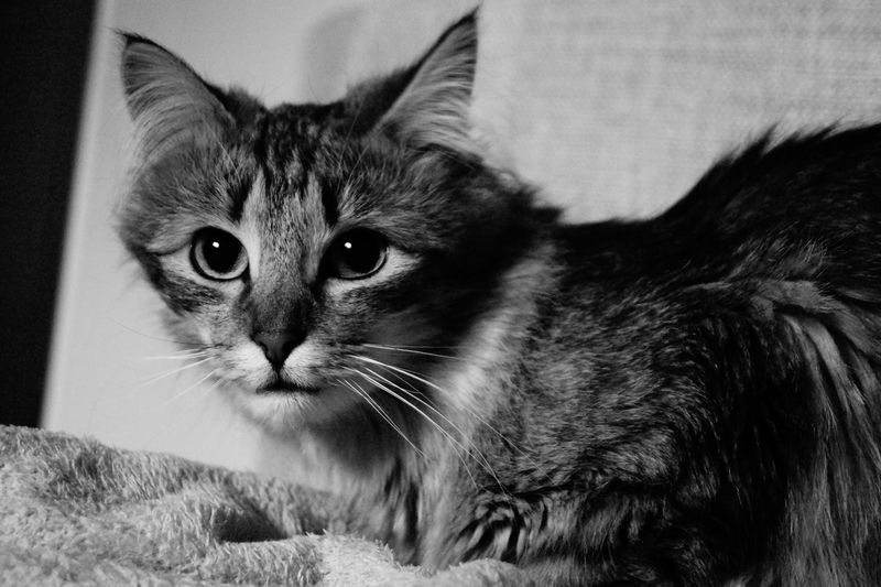 Shades Of Grey Eyeem Missions Cats 🐱 Ofélia Beautiful Nature So Sophisticated Like A Model
