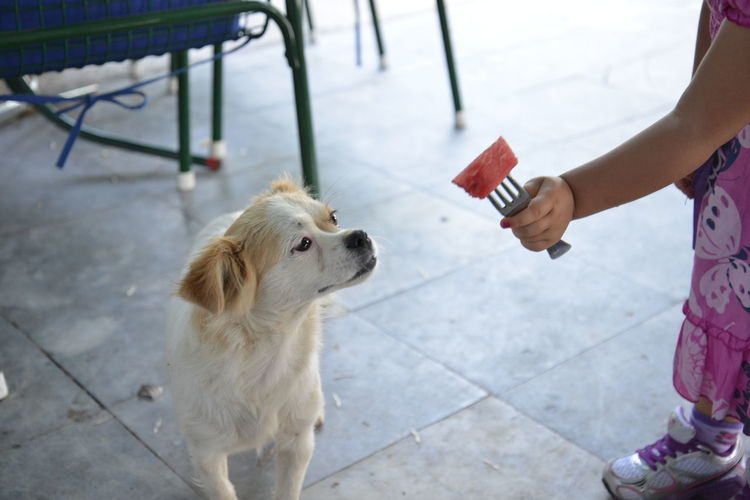 Cropped Hand Giving Food To Dog