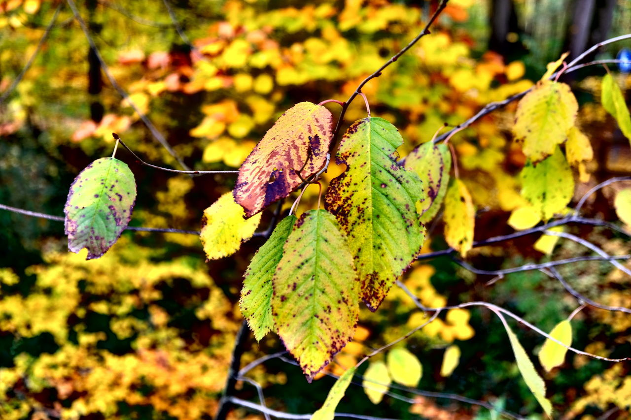leaf, plant part, plant, focus on foreground, close-up, growth, nature, day, no people, autumn, beauty in nature, green color, change, tree, outdoors, dry, sunlight, leaves, vulnerability, fragility