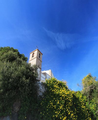 Low Angle View Building Exterior Built Structure Blue Architecture Tree Sky Growth Plant Cloud - Sky Day Place Of Worship Casares Casares Town Spain Casares Old Town Yellow Flower Yellow Flowers Blue Sky Clear Sky Lookingup Low Angle View Andalucian Town Andalucían Old Town Church Church Exterior
