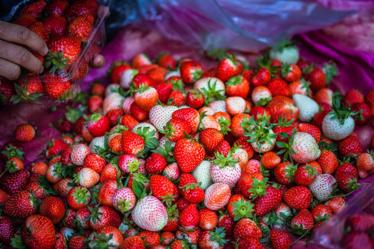 fresh strawberry from the farm to sell in the market on Mon Jam tribal village in Chiang Mai Business Cool Freshness Red Stawberry Fruit Mountain Shop