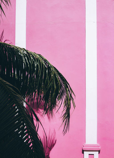 VIBES Architecture Building Exterior Caribbean Explore Exploring EyeEm EyeEm Best Shots EyeEm Gallery Green Jamaica Lines Minimal Minimalism Nature No People Outdoors Palm Tree Photography Pink Pink Color Stripes Pattern Taking Photos Taking Pictures Tree Vibrant Fresh On Market 2017