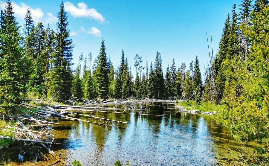 Sunriver, Oregon Relaxing Taking Photos National Forest Oregon Reflection River Travelling Photography EyeNatureLover Travellingphotography EyeEm Nature Lover Clouds And Sky Travel Photography
