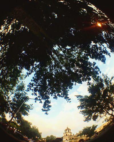 Tree Sky Nature