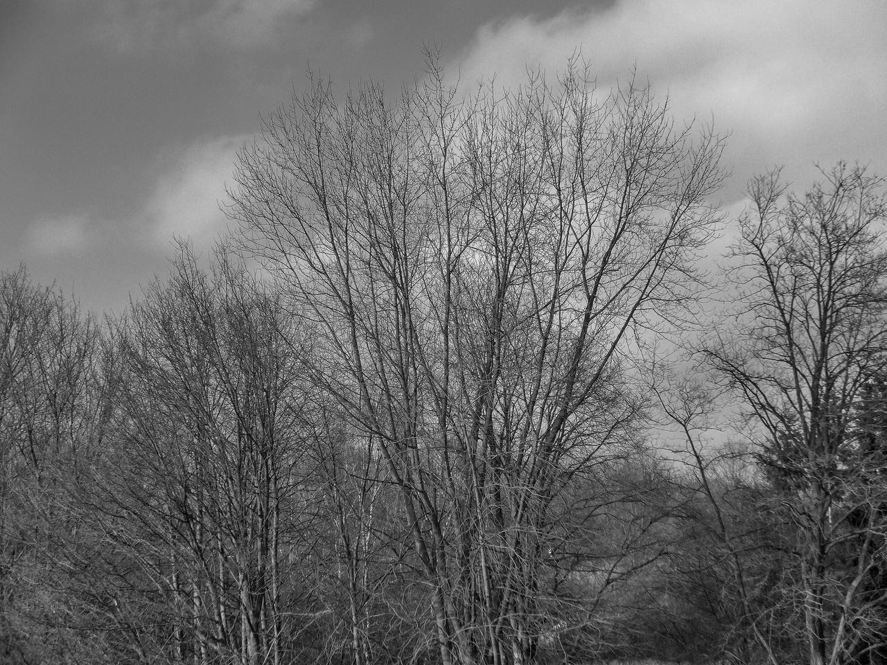 bare tree, tree, nature, low angle view, outdoors, sky, day, tranquility, beauty in nature, branch, no people, scenics