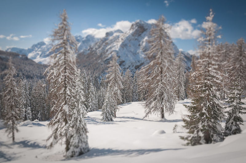 Snow covered trees on mountain against sky
