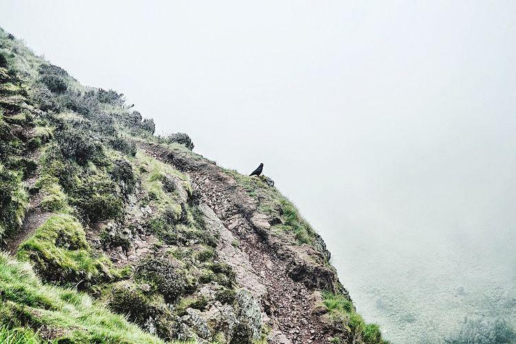 Mountain Arthurs Seat Edinburgh Green Bird