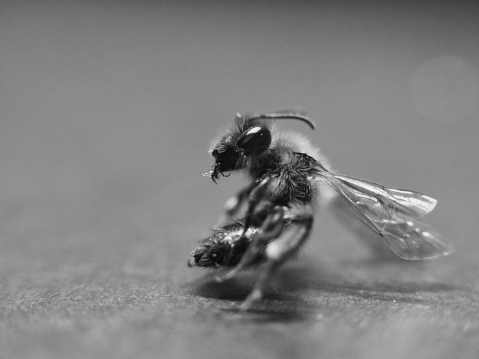 Close-up of fly on the table