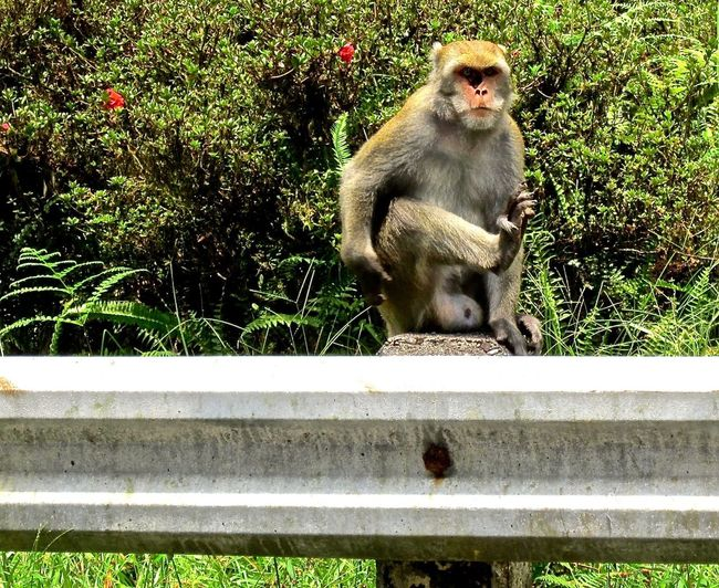 Monkey with hole in face on guardrail. Travel Photography Side Of The Road Monkey EyeEm Taiwan Oddity Wildlife Taiwan Animal