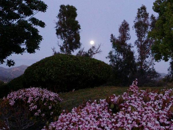 Moon Nature San Diego California Poway, Ca Flowers Trees Naturephotography