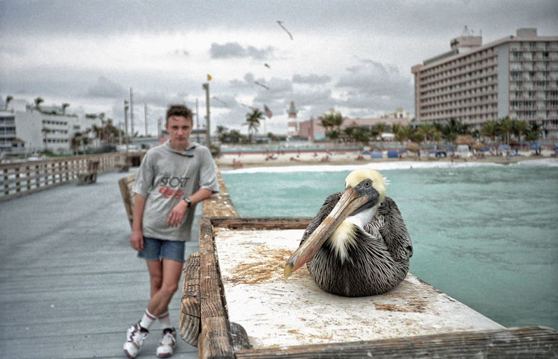 Man looking at pelican on pier railing over sea in city