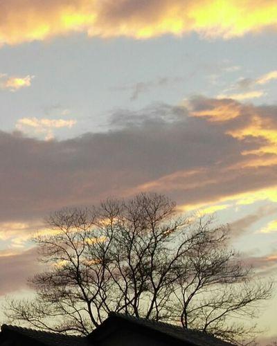 Dead Or Alive  Roof Tree Balikpapan Kalimantan Kalimantan Timur INDONESIA