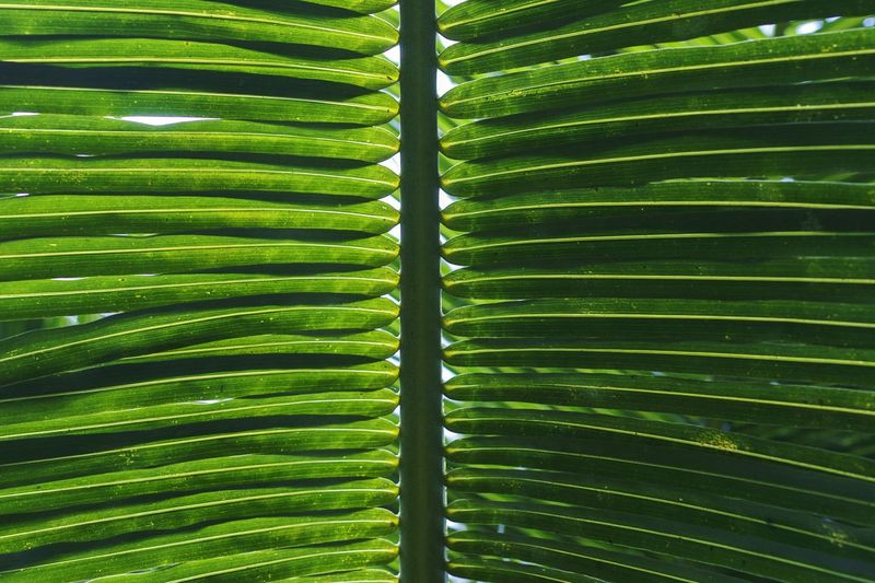 I am green. Are you? Natural Pattern Green Nature Palm Simmetry Tropical Paradise Tropical Nature Photography