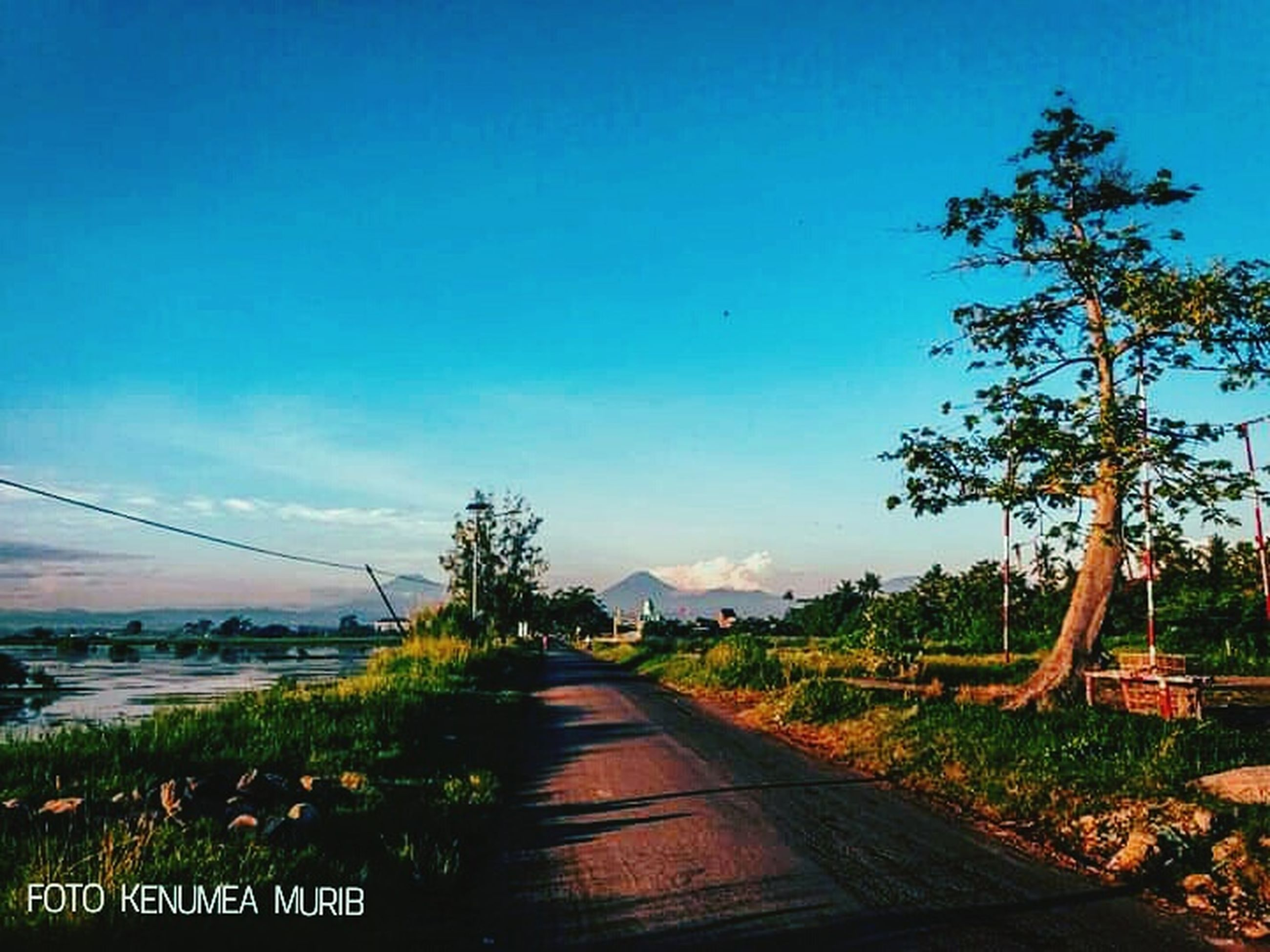 plant, sky, tree, direction, the way forward, nature, road, no people, growth, blue, transportation, beauty in nature, landscape, tranquility, land, field, day, tranquil scene, diminishing perspective, clear sky, outdoors