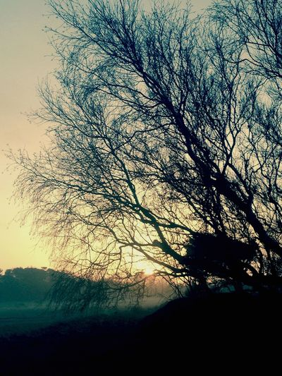 Trees Sunset Silhouettes Nature_collection Happy New Year 2015 Landscape