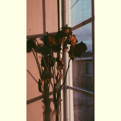 Dead Dead Plant Dead Flowers Flowers